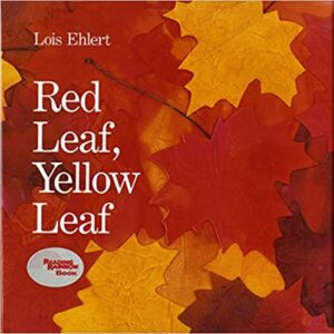 speech and language teaching concepts for Red Leaf Yellow Leaf in speech therapy